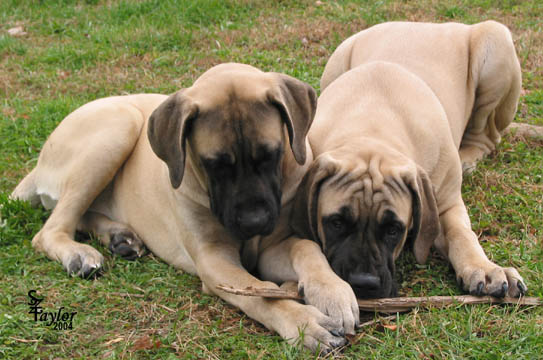 Tessa (right) with her sister 